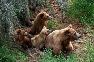 החיה החמישית – הדוב