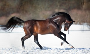 הסוס מסמל עוצמה